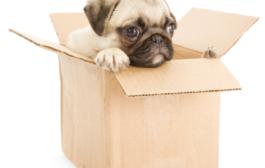 Stresszmentes költözésre vágyik? Szakszerű segítséggel semmi akadálya!