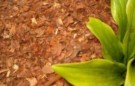 Esztétikus fenyőkéreg kertje védelméért!