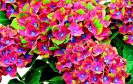 Egyedülálló és gyönyörű kerti növények választéka
