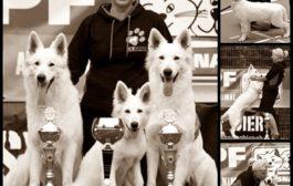 Fajtatiszta kutyák tenyésztése, és értékesítése