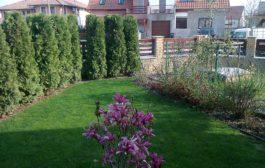 Szakszerű szolgáltatások a kertészkedés valamennyi szegmensében
