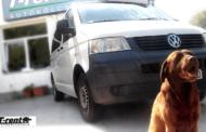 Autókölcsönzés, egy csipetnyi szabadság