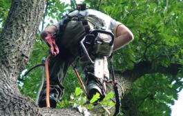 Kivágatná néhány fáját?
