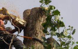 Veszélyes fa? Ne vágjon bele egyedül!