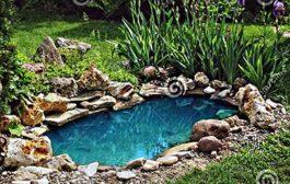A kerti tavak karbantartásához szükséges eszközök