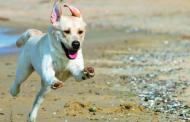 Kutyánk egészsége