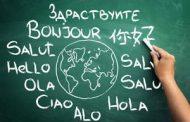 Professzionális fordító iroda