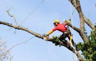 Veszélyes vagy problémás fák kivágása