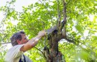Vihar után veszélyessé vált a fája? Segítünk!