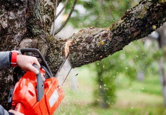 A vihar után veszélyessé vált a fa? Hívjon minket!