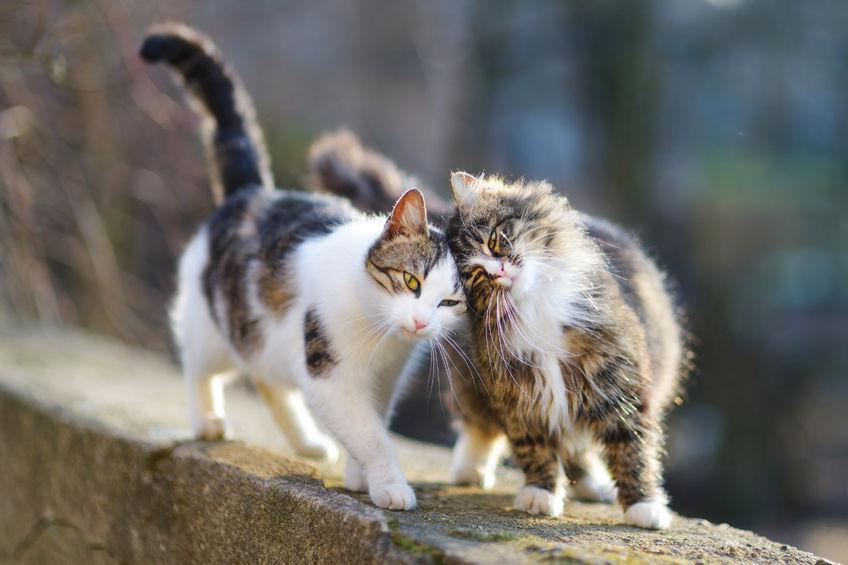 A háziállatok múlandósága