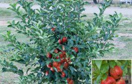 Kertészeti webáruház: rendeljen tőlünk!